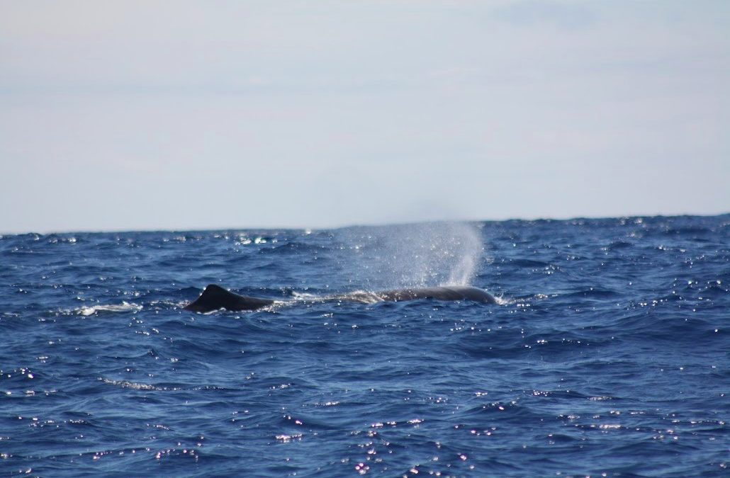 THE SOCLIMPACT PROJECT CASE STUDY: WHALE WATCHING AND CLIMATE CHANGE AT EUROPEAN ISLAND DESTINATIONS